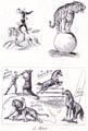 Animal_tricks_b